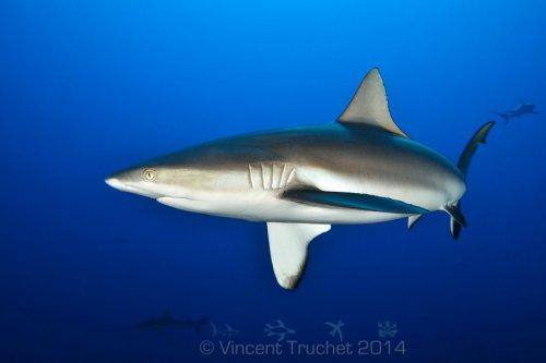 Подводные фотографии морских животных (40 фото)