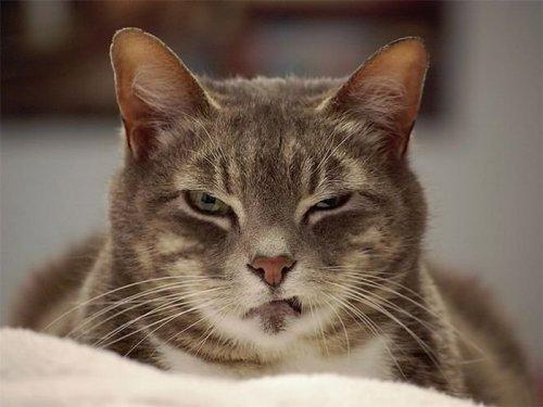 Коты-проказники (17 фото)