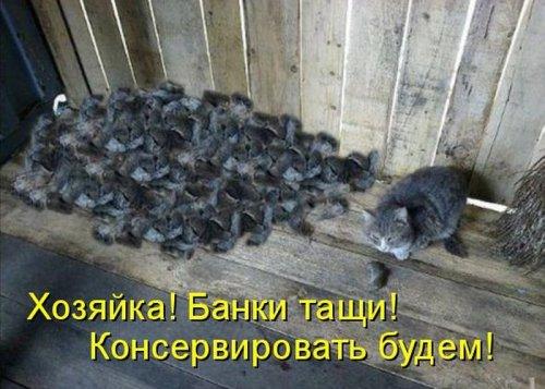 Забавные котоматрицы (30 фото)