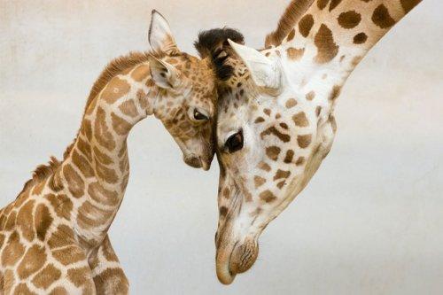 Семейные фото животных (22 фото)