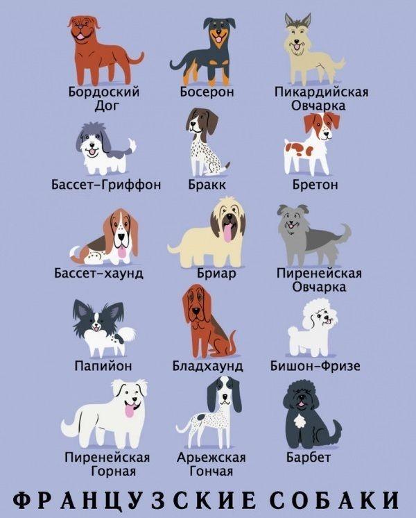 актуальное расписание когда начали изучать породы собак это сложная система