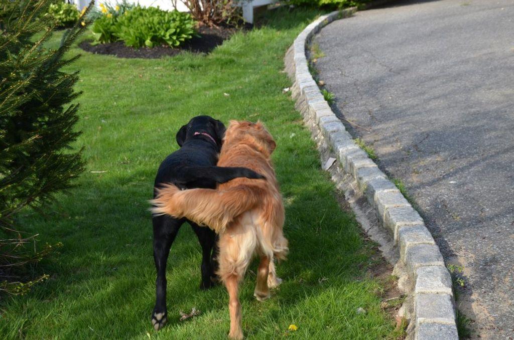 Прикольные картинки прогулка с собакой