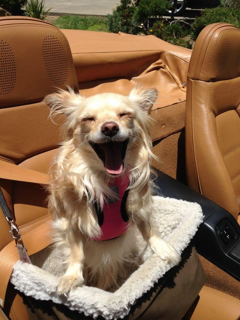 Собаки картинки и фото приколы