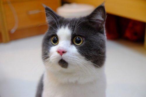 Удивлённый кот Банье (9 фото)