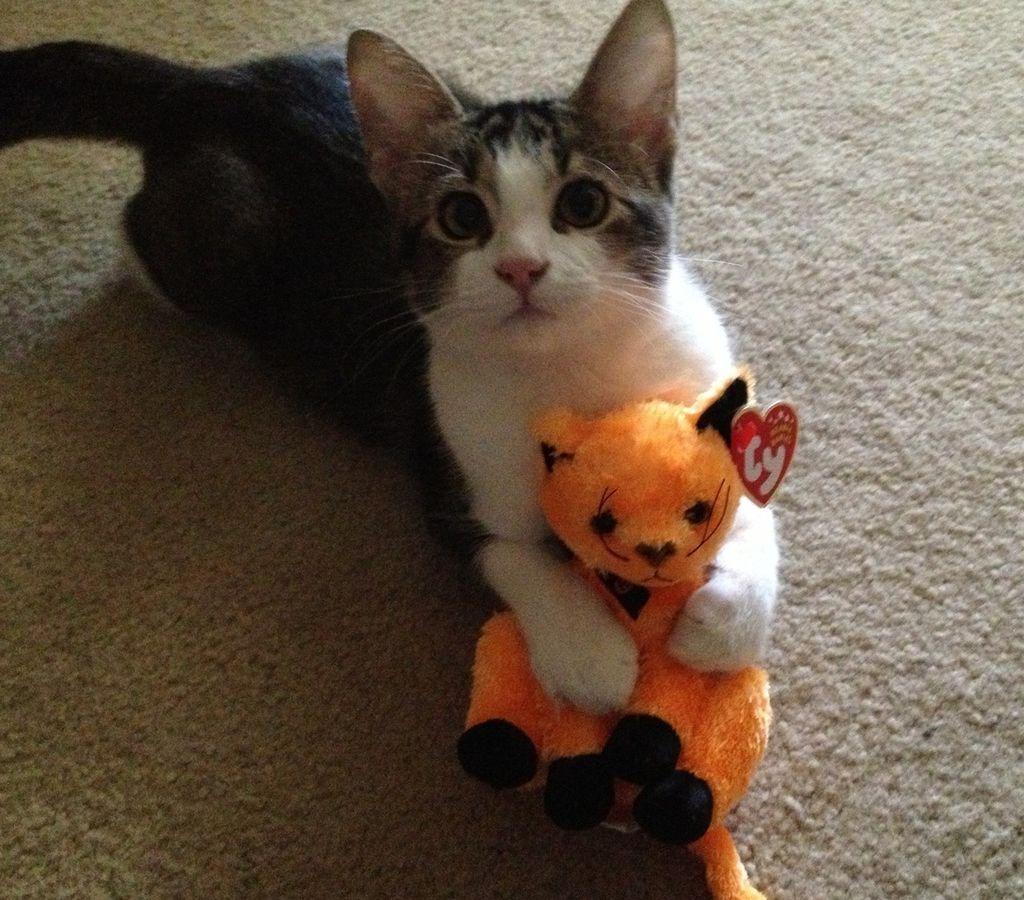 уинслоу коты с игрушками фото чем