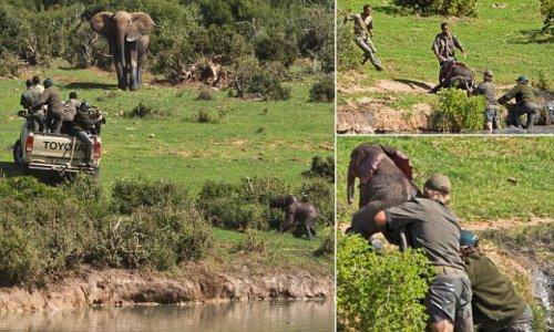 Как рейнджеры спасали слонёнка (12 фото)