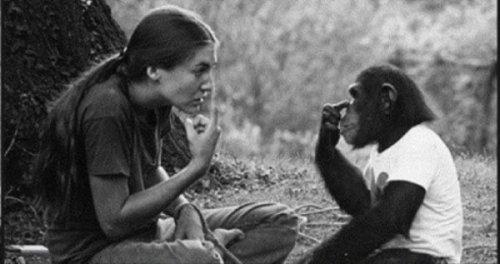 Насколько умными могут быть обезьяны (4 фото)