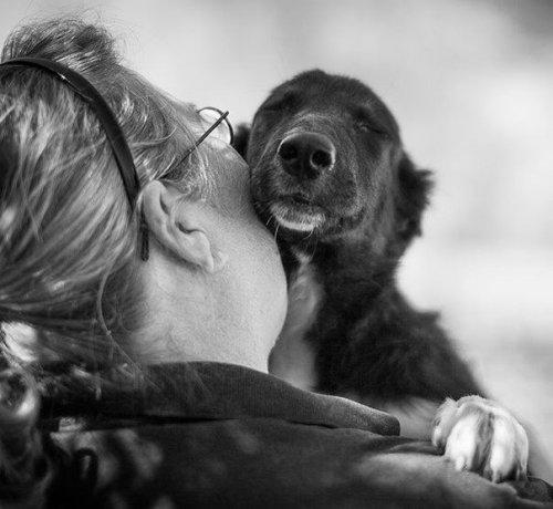 Самые любвеобильные существа (25 фото)