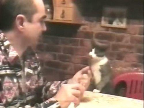 Кот общается со своим хозяином