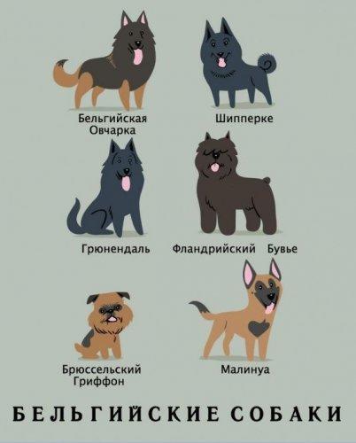 Какой национальности Ваша собака? (15 фото)