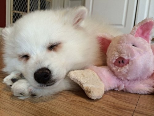Зверушки и их любимые игрушки (40 фото)