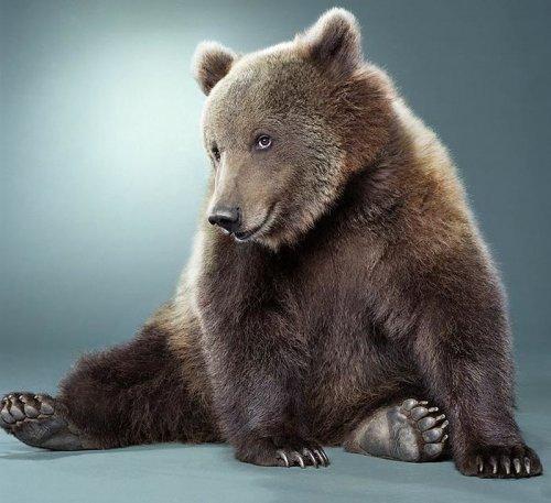 Древние китайцы приручили медведей раньше собак