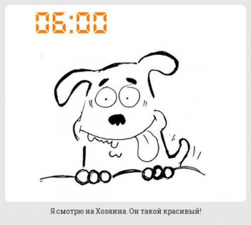 Юмор:Один день из жизни собаки (19 фото)
