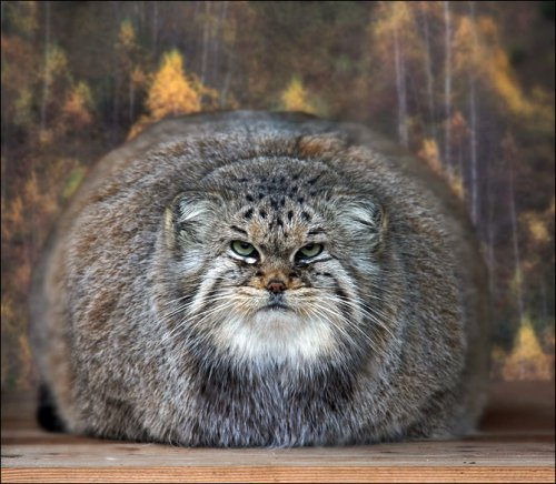 История побегов животных из Московского зоопарка