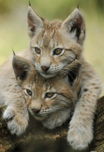 Милые и забавные животные (40 фото)