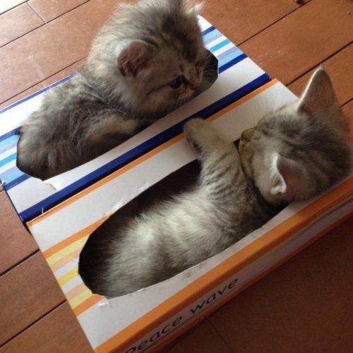 Ох уж эти кошки! (35 фото)