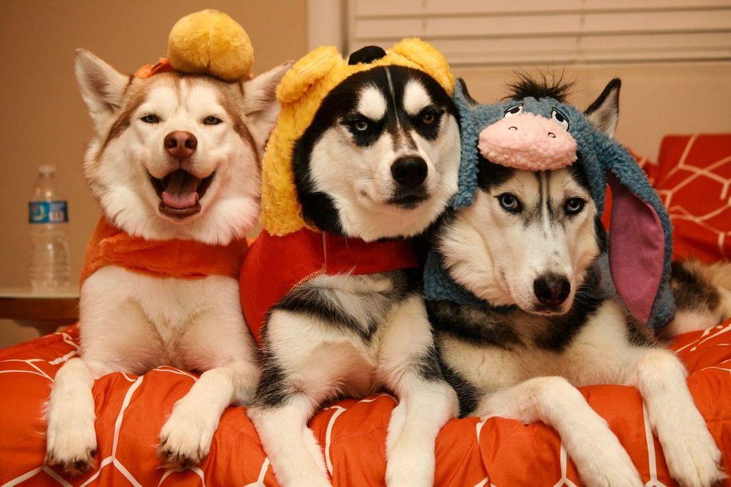 Фото с собаками прикольные