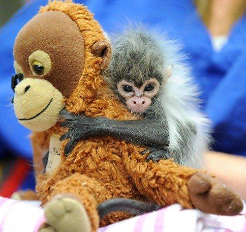 Животные, мягкие игрушки и обнимашки (15 фото)