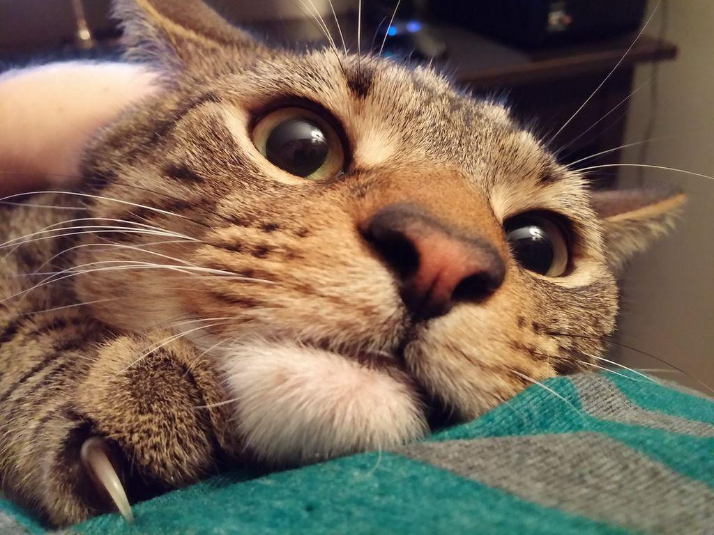 Смешные картинки с кошка, февраля рисунки прикольные