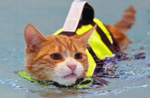 Кошки тоже любят плавать (14 фото)