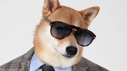 Сколько зарабатывают самые популярные животные в интернете (7 фото)