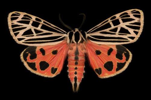 Необычная коллекция мотыльков Джима де Ривьера (14 фото)