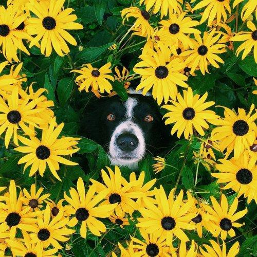 Найти собаку на картинках (30 фото)