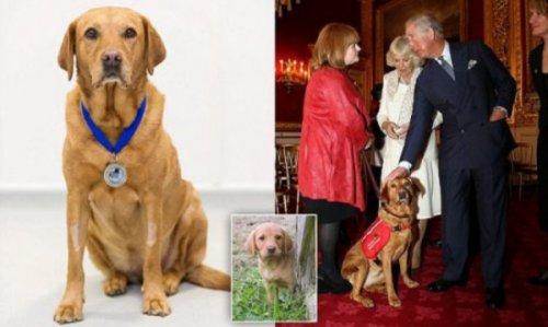 Удивительная собака нашла рак у 551 человека и получила медаль от принца Чарльза