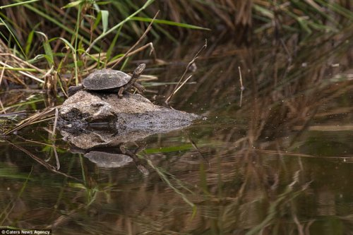 Побег из пасти крокодила (7 фото)