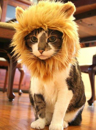 Домашние львы,или я у мамы лев (16 фото)