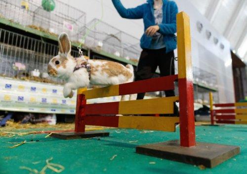 Кроличьи бега (18 фото)
