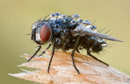 Макропортреты насекомых (60 фото)