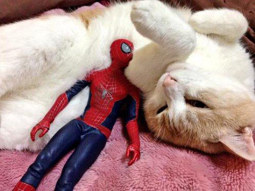Человек-паук — кошатник в душе (8 фото)