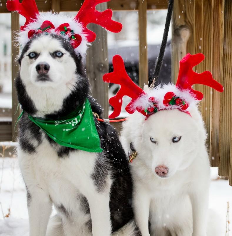 Картинки с пожеланиями новогоднего настроения его