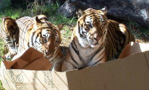 Зверушки в коробках (10 фото)