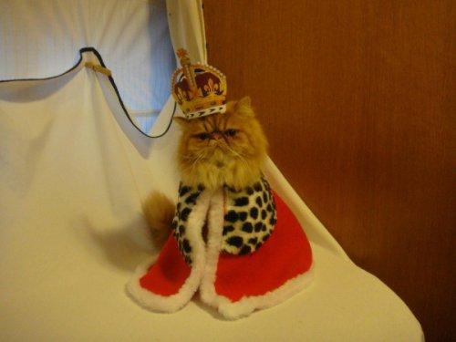Юмор: Кодекс Настоящего кота