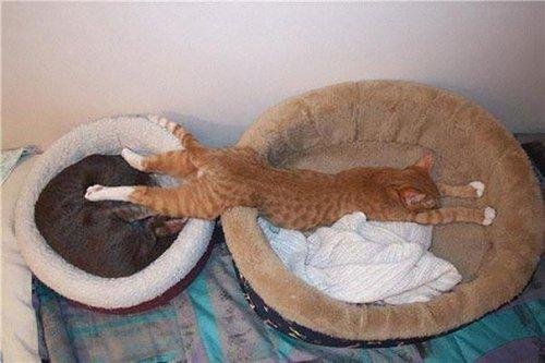 Спят усталые и смешные котяры (35 фото)