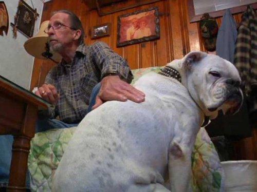 Больной пёс спас жизнь своему хозяину (3 фото)