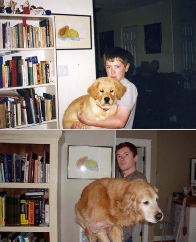Домашние животные спустя годы (19 фото)