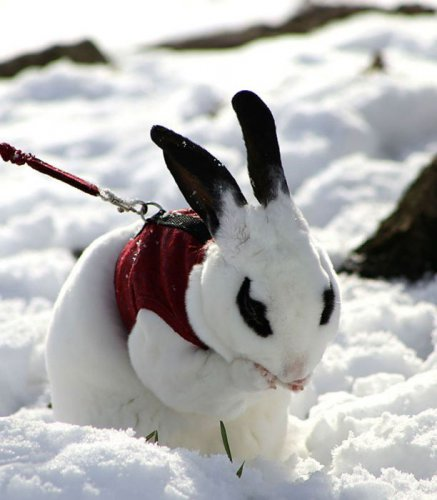 Первый снег в жизни животных (48 фото)