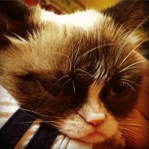 Grumpy Cat за 2 года обогатила свою хозяйку на 100 миллионов долларов (20 фото)