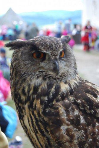 Величественные и загадочные совы (30 фото)