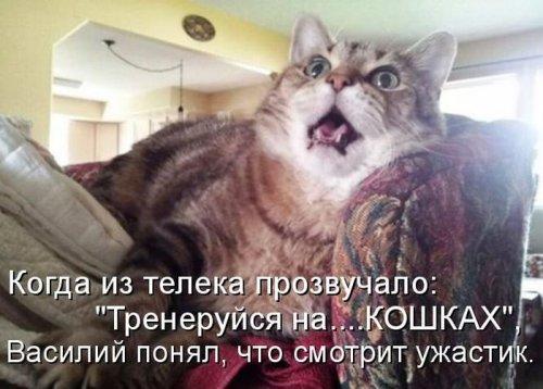 Любимые котоматрицы (40 фото)