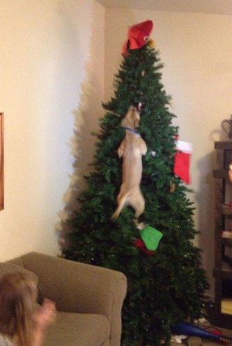 Кошки и собаки, которые не любят Новый год (33 фото)