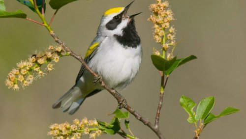 Птицы слышат приближение бурь