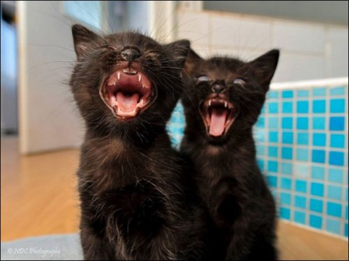 Коты-синхронисты (19 фото)