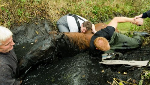 Спасение лошадки (7 фото)
