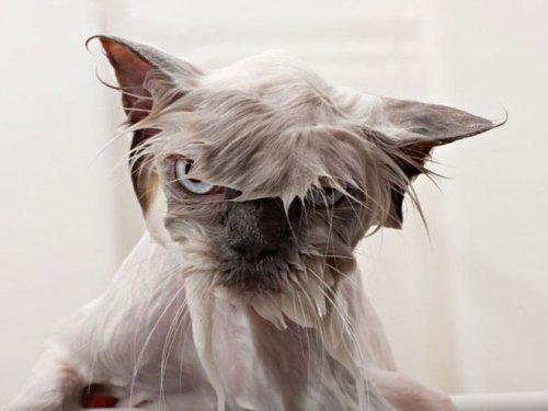 Купание котов (17 фото)