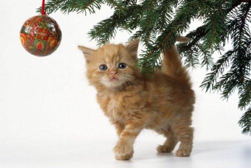 Как защитить кошку и обезопасить свою Новогоднюю ёлку