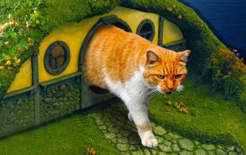 Креативный кошачий дом (16 фото)